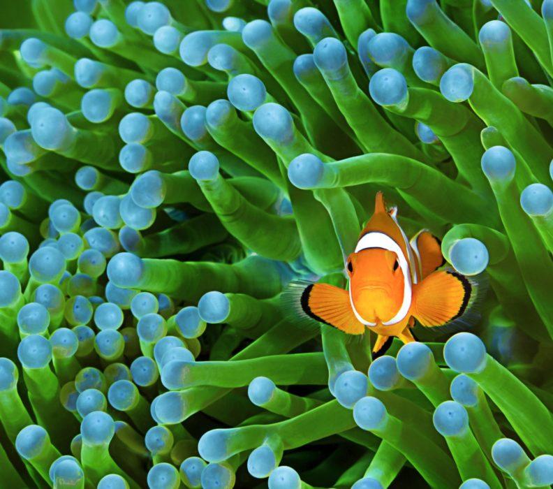 Une nouvelle forme de société symbiotique en réponse aux enjeux environnementaux, économiques et sociaux.